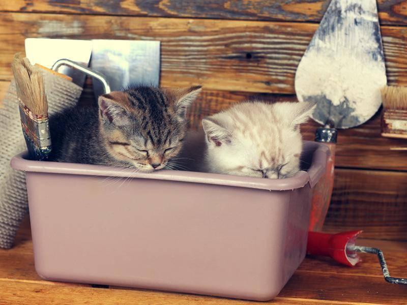 ... weil Katzenbabys einfach überall schlafen können — Bild: Shutterstock / vvvita