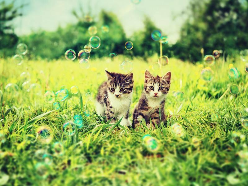 ... weil nur Katzenfreunde sich genauso für Seifenblasen begeistern können, wie man selbst — Bild: Shutterstock / Poprotskiy Alexey