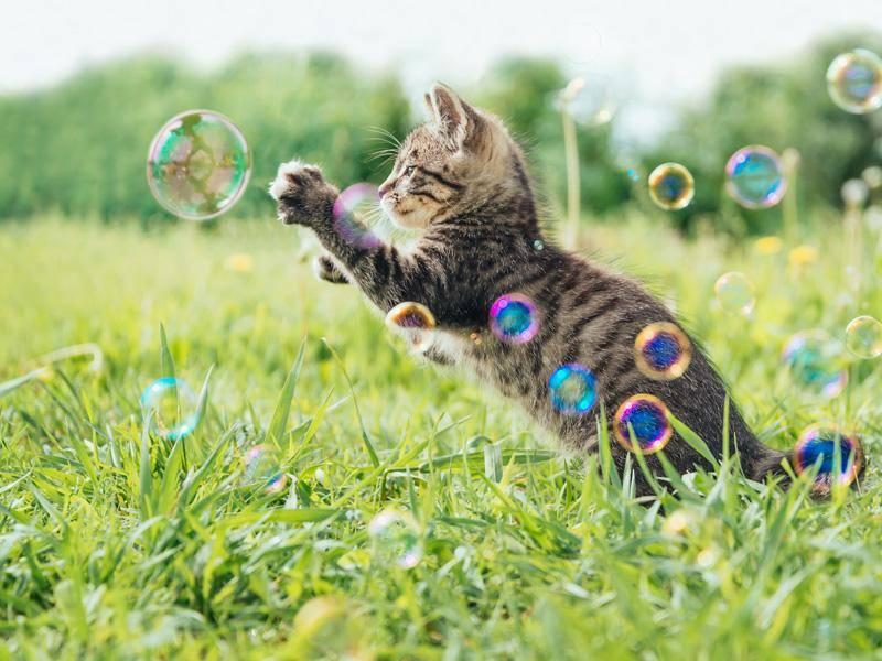 Wir wünschen dir ein schönes Leben, kleines Katzenbaby! — Bild: Shutterstock / Poprotskiy Alexey