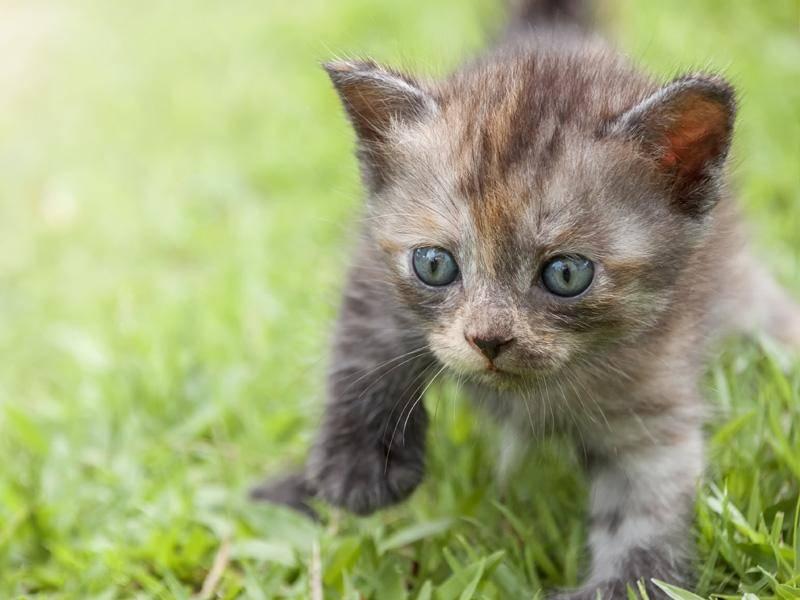 Minikleiner Ausflug nach draußen: Viel Spaß, kleines Katzenbaby — Bild: Shutterstock / Sakkarin Kamutsri