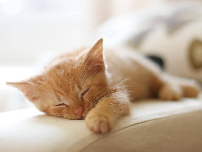 Supersüßer Winzling: Erstmal ein bisschen schlafen — Bild: Shutterstock/Dalibor Valek