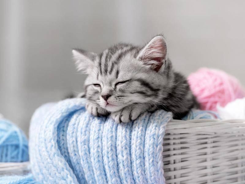 Traumhaftes Katzenleben: Herumhängen und schlafen — Bild: Shutterstock / Vasilyev Alexandr
