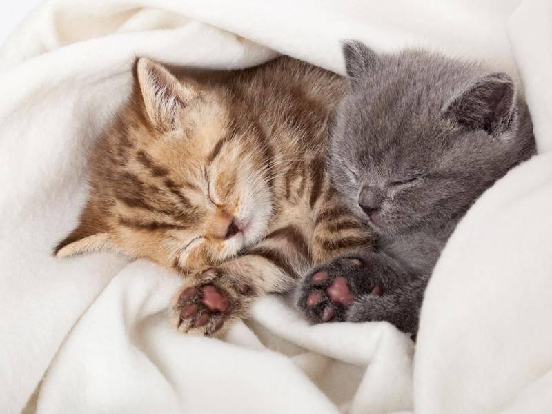 Verträumte Kuschelfreunde machen ein Katzennickerchen — Bild: Shutterstock / NatUlrich