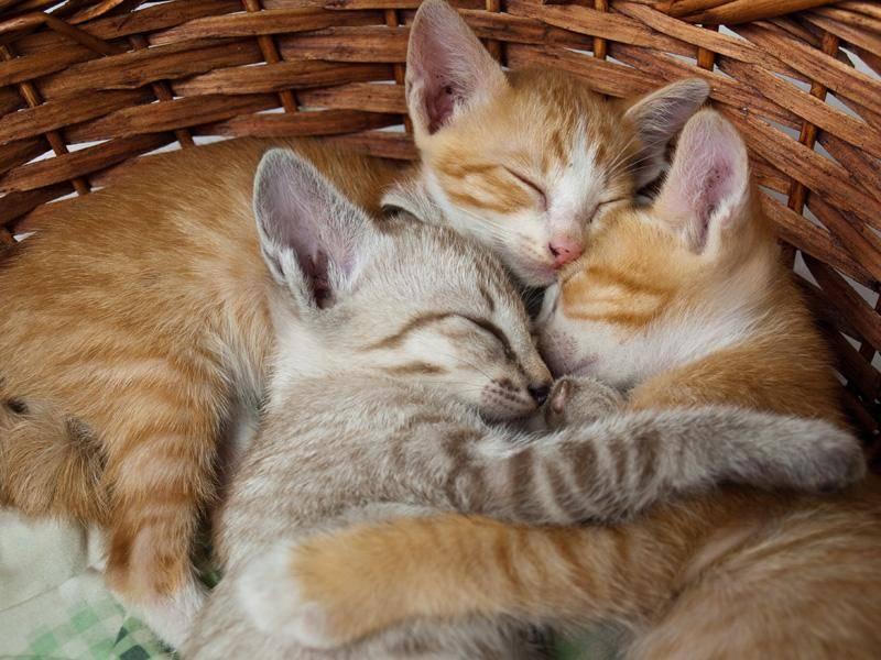 ... weil Katzen so weich sind, dass man einschläft, wenn man mit ihnen kuschelt — Bild: Shutterstock / fri9thsep
