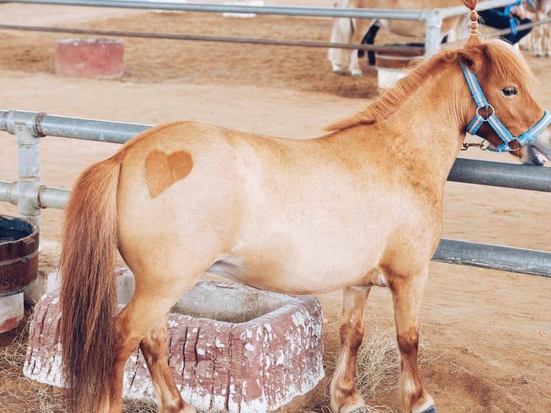 Ein Herz für Pferde? - Bild: Shutterstock / Robie Online