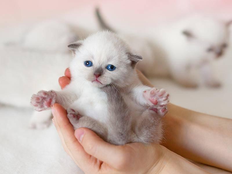 Aww, was für niedliche kleine Pfötchen dieses Katzenbaby hat! - Bild: Shutterstock/vvvita