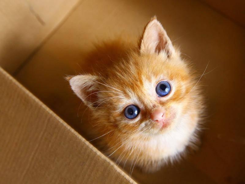Du brauchst dich nicht zu verstecken, kleines rotes Katzenbaby — Bild: Shutterstock / Lapina