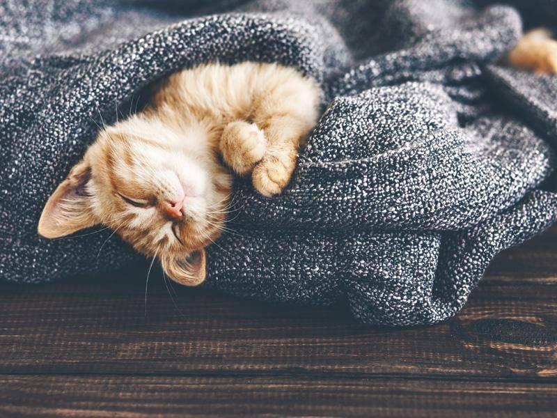 Und noch ein müdes rotes Katzenbaby: Gute Nacht! — Bild: Shutterstock / Alena Ozerova