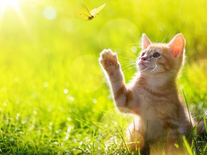 Bezaubernder Naturausflug eines roten Katzenbabys — Bild: Shutterstock / Konstanttin