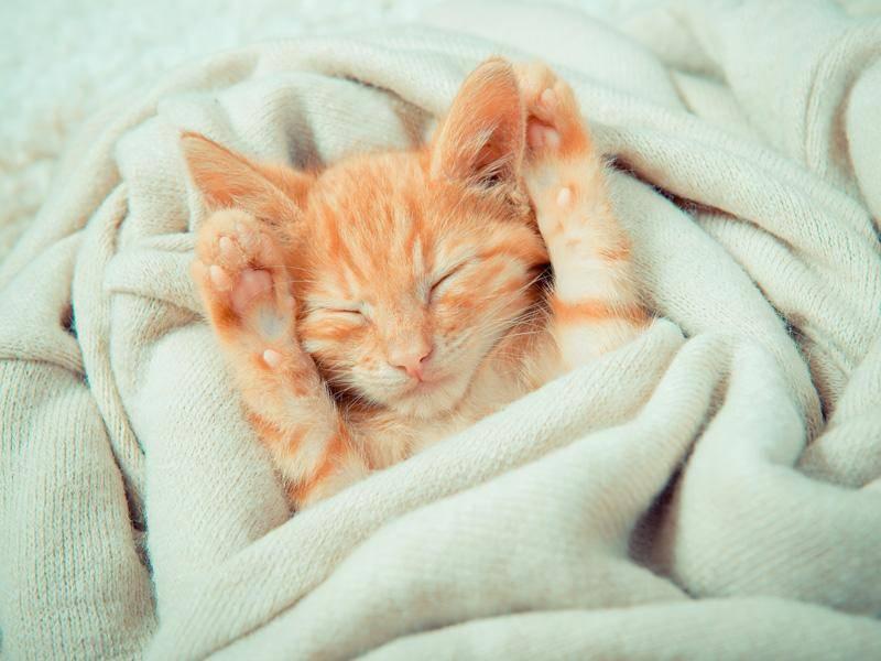 Süßes schlafendes Katzenbaby: Kleines Wollknäul zum Verlieben — Bild: Shutterstock / Nataliia Budianska