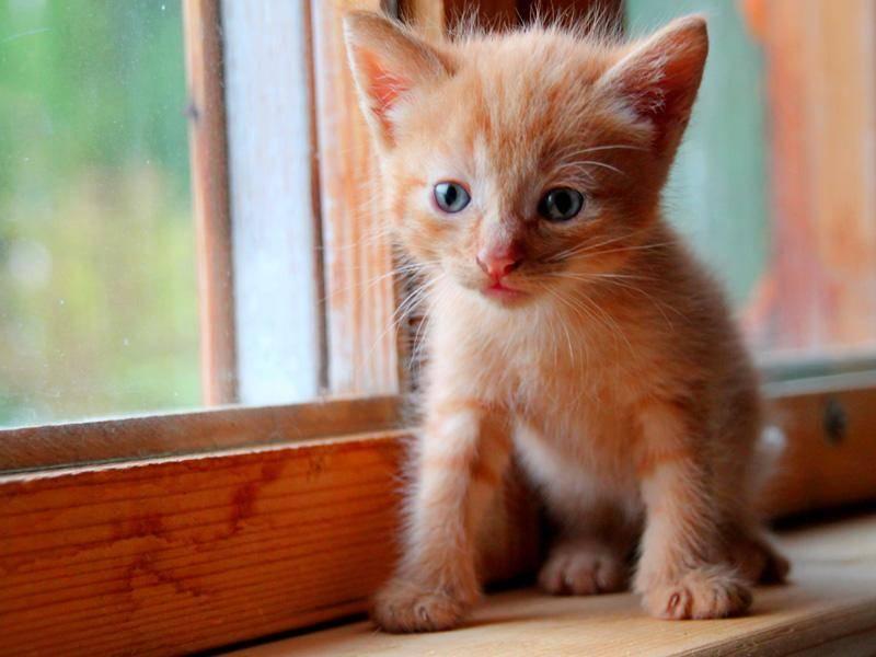 Große weite Welt: Neugieriges Katzenbaby wirft einen Blick aus dem Fenster — Bild: Shutterstock / Real Moment