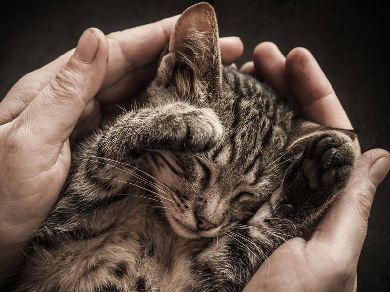 Psst, bitte nicht stören! Dieses Kätzchen erholt sich gerade von großen Abenteuern. - Bild: Shutterstock/gornostay