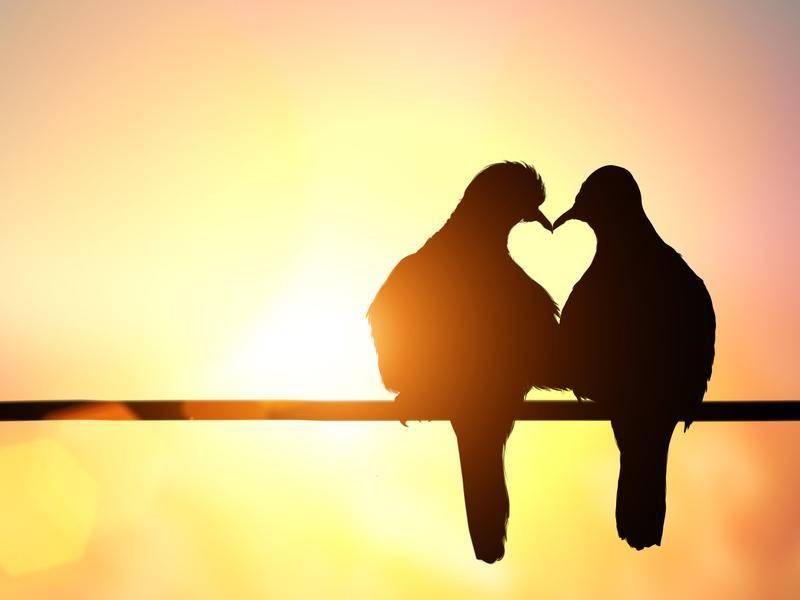 Ein Herz und eine Seele, diese zwei kleinen Vöglein — Bild: Shutterstock / LittlePerfectStock