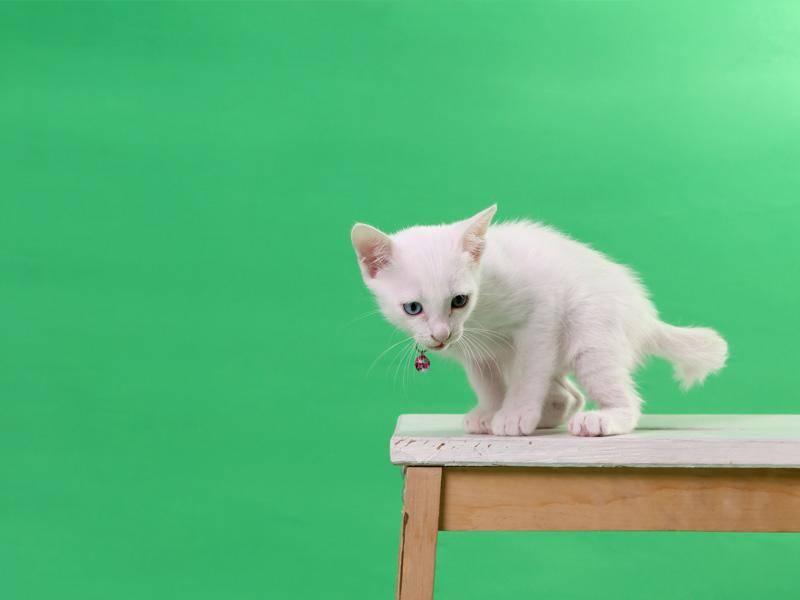 Kleine Schönheit mit einem blauen und einem grünen Auge — Bild: Shutterstock / kimberrywood