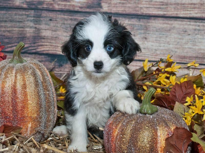 Noch etwas schüchtern aber tierisch schön: Ein Welpe mit blauen Augen – Bild: Shutterstock / JStaley401