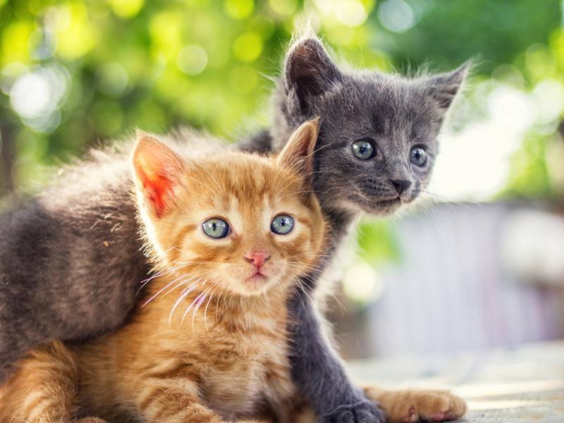 ... weil Katzenfreunde sich oft von klein auf kennen — Bild: Shutterstock / CebotariN