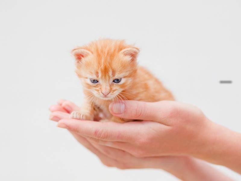 Schlafen, oder doch wieder spielen, scheint sich dieser kleine rote Stubentiger zu denken. - Bild: Shutterstock/YuliaPodlesnova
