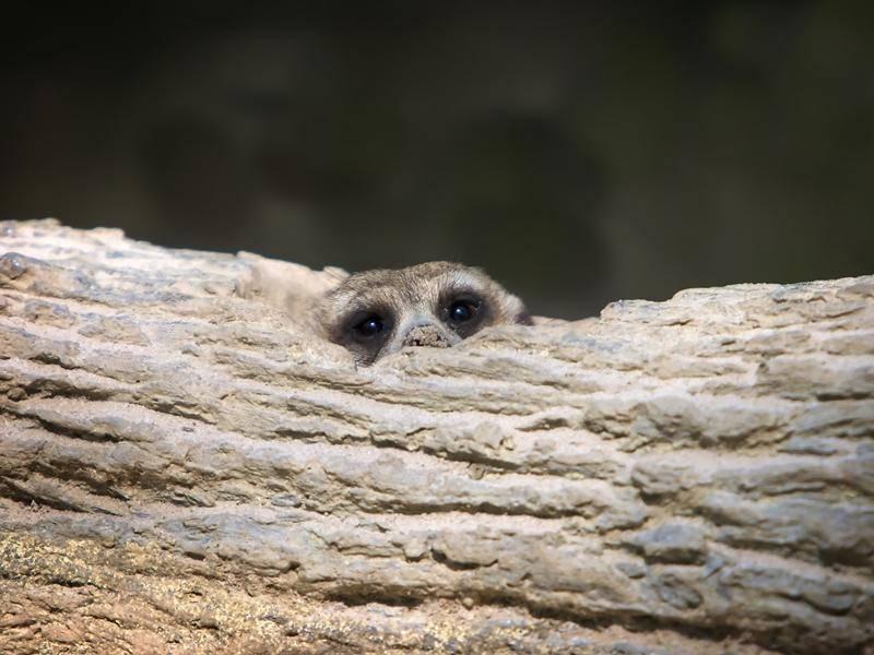 """""""Kuckuck! Seht ihr mich?"""" - Bild: shutterstock / OtmarW"""