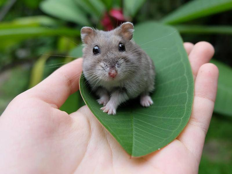 Kleiner Hamster, große Neugierde: Draußen auf Entdeckungstour - Bild: Shutterstock / EniSine