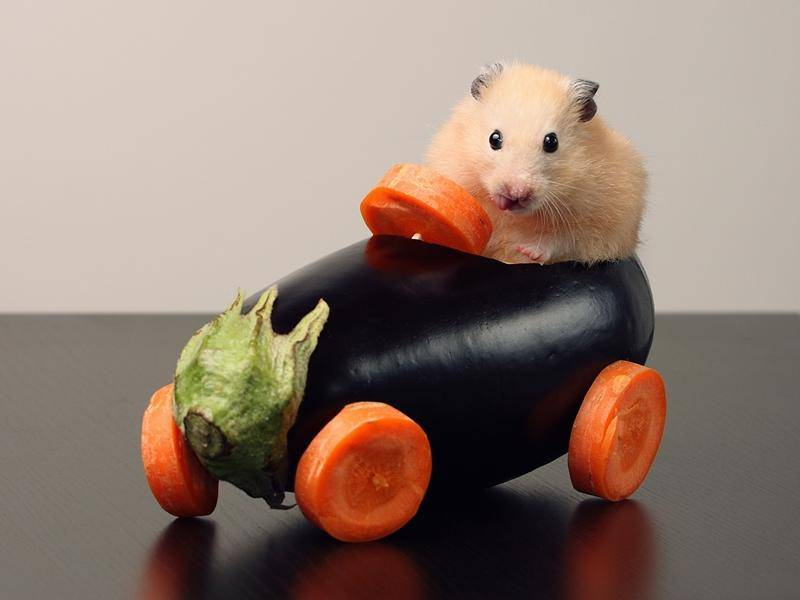 ...oder mit der Gemüse-Variante - Bild: Shutterstock / Stanislaw Sulica