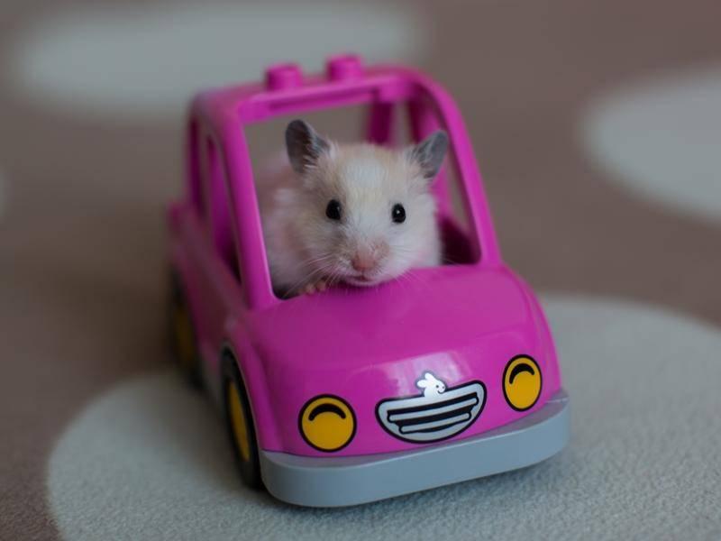 Hamstermobil auf Tour: Pretty in Pink! - Bild: Shutterstock / polya_olya