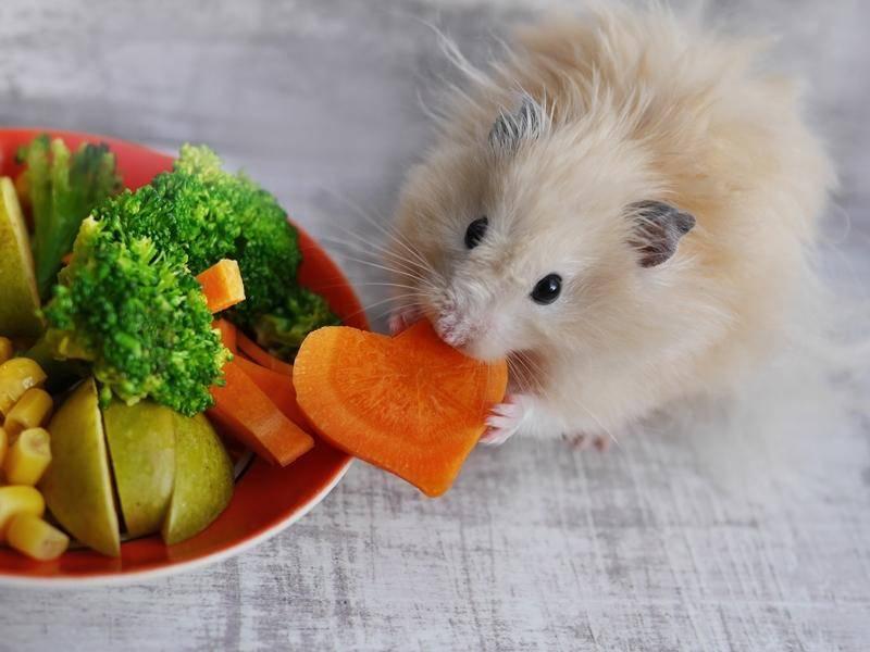 """""""In Herzform schmeckt es doch gleich viel besser!"""" - Bild: Shutterstock / tanya_morozz"""