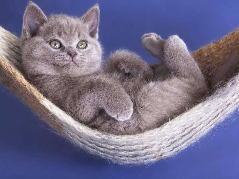 Aufgewacht! Guten Morgen, kleines Katzenbaby - Bild: Shutterstock / Liliya Kulianionak
