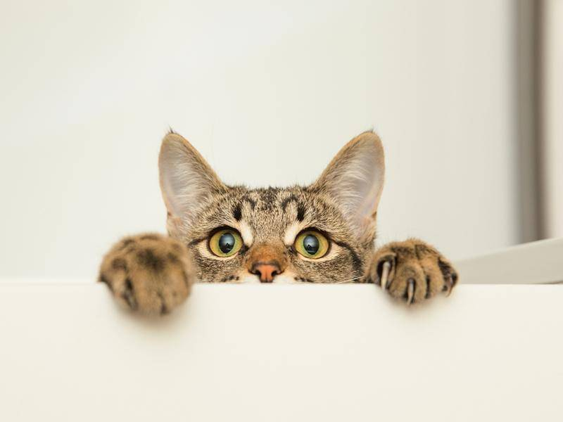 Und große Katzen natürlich auch - Bild: Shuttertsock / Lario