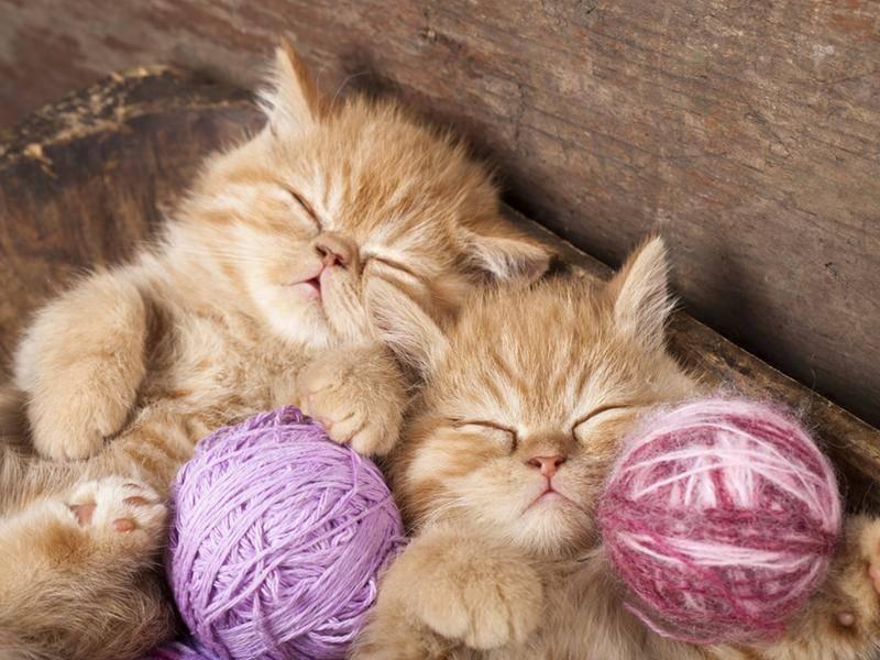 Diese kleinen Katzenbabys kuscheln gerne mit Wollknäueln - Bild: Shutterstock / Liliya Kulianionak
