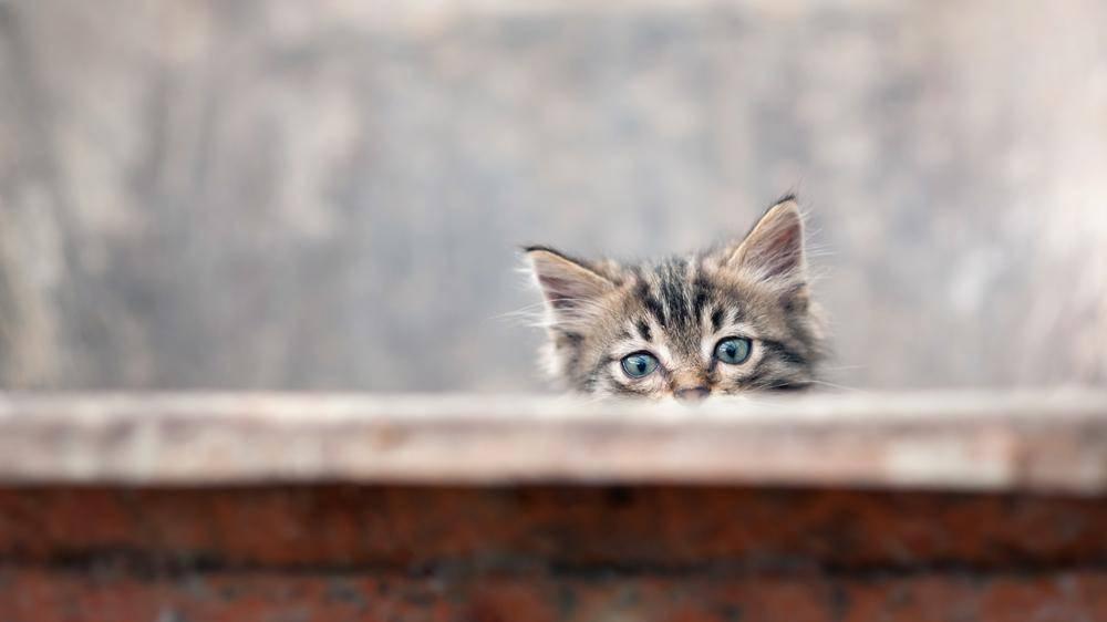 Und ab auf den nächsten Streifzug! Viel Spaß, kleine neugierige Katze - Bild: Shutterstock / pio3