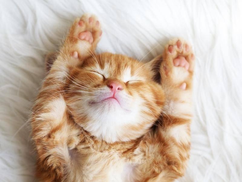 Kuschelig, kuscheliger, schlafendes Katzenbaby - Bild: Shutterstock / Alena Ozerova