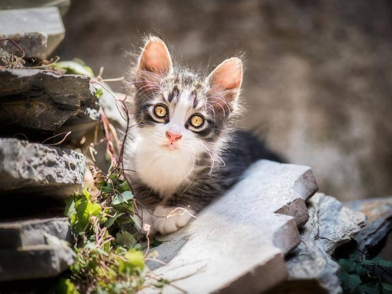 Tierisch süß: Den neugierigen Blick beherrschen fast alle kleinen Katzen - Bild: Shutterstock / Bora Yetimoglu