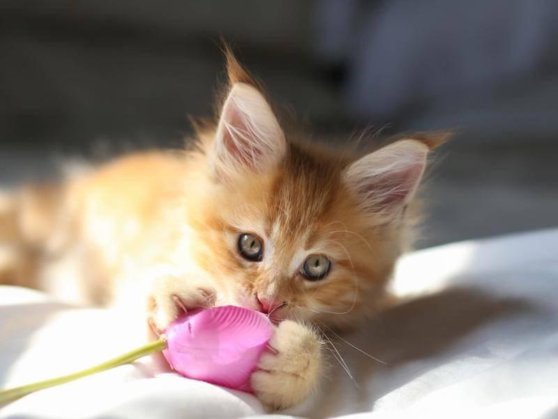 """""""Ui, eine Blume - wie aufregend!"""" Neugierige Katze auf Tour - Bild: Shutterstock / Bignai"""