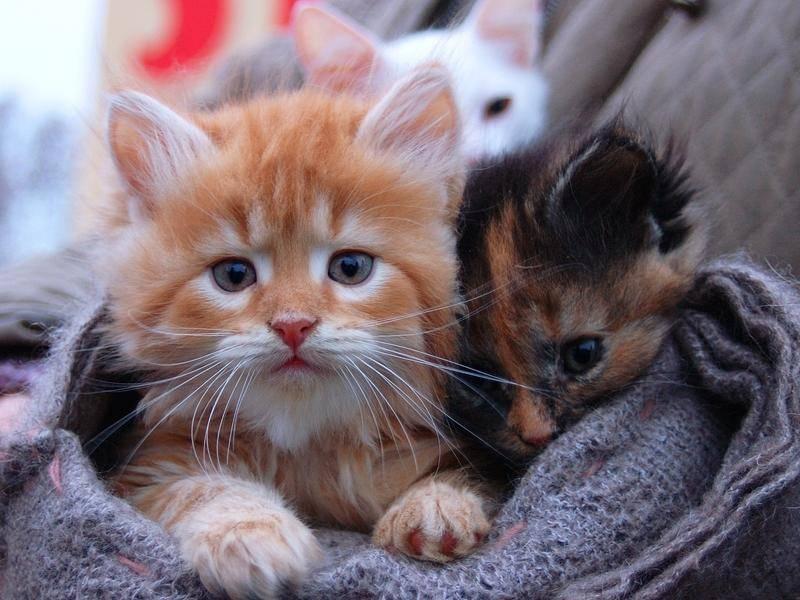 Auf diesem Bild haben sich auch ein paar Katzenbabys mit anderen Farben eingeschlichen – Bild: shutterstock / Mikhail Leonov