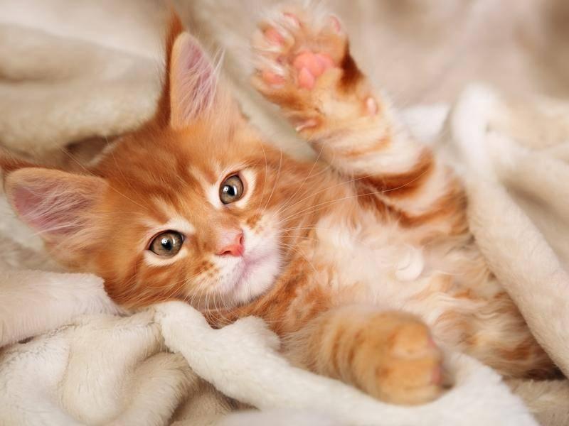 """Das kleine rote Katzenbaby sagt jetzt """"Bis baaald!"""" - Bild: shutterstock / Sofi photo"""