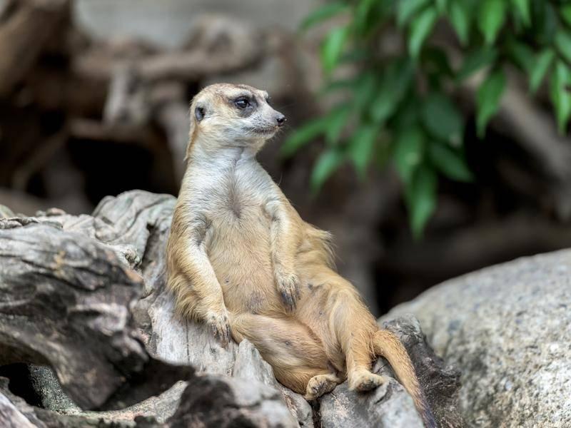 """""""Was denn? Ich sitz doch nur hier!"""" – Bild: shutterstock / MAGNIFIER"""