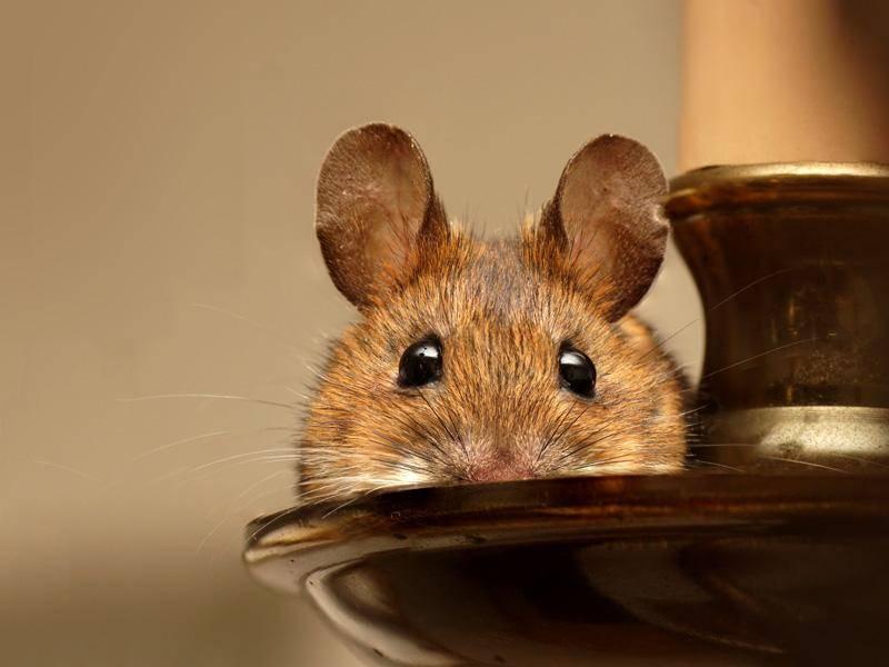 Kuckuck! Wer ruht sich denn da auf einem Kerzenleuchter aus? - Bild: Shutterstock / poidl