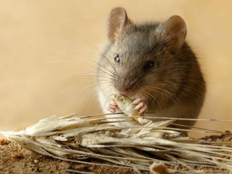 """""""Mmmmh, ist das lecker!"""" - Bild: Shutterstock / torook"""