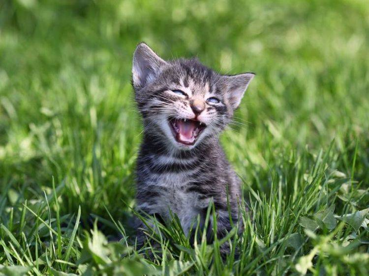 katze miaut nicht mehr richtig
