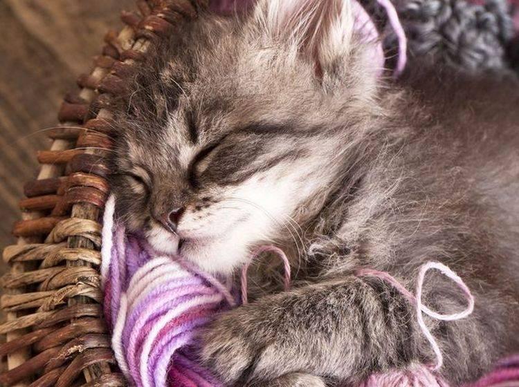 Junge Katze im Körbchen
