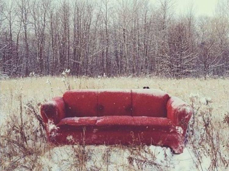 Border-Collie-Hund-Momo-Sofa-Rot-Verstecken-Feature