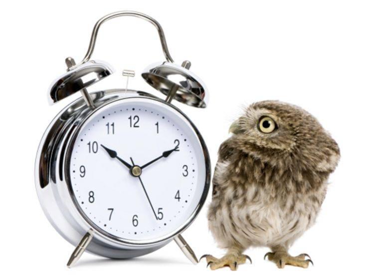 Die innere Uhr der Tiere: Ist es wirklich schon so spät?