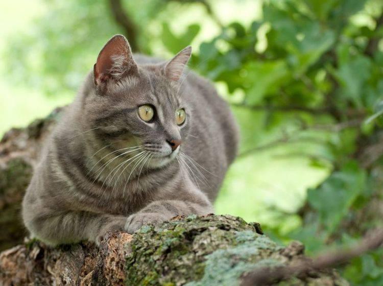 Graue Katze auf dem Baum