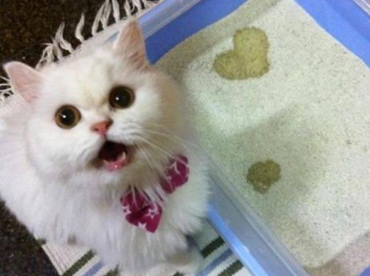 Herz-Katzenklo-Vorschaubild