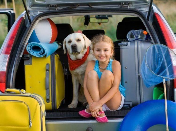 Labrador Hund mit Mädchen im Kofferraum