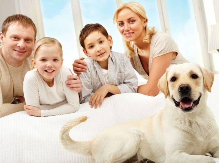 Hund Aus Dem Tierheim Die Eingewohnung Braucht Zeit