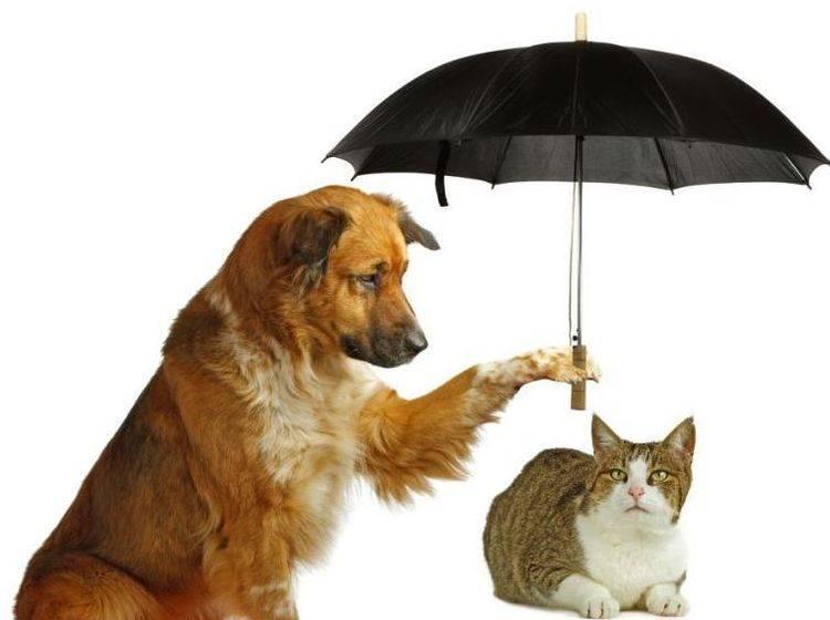Hund und Katze mit Regenschirm