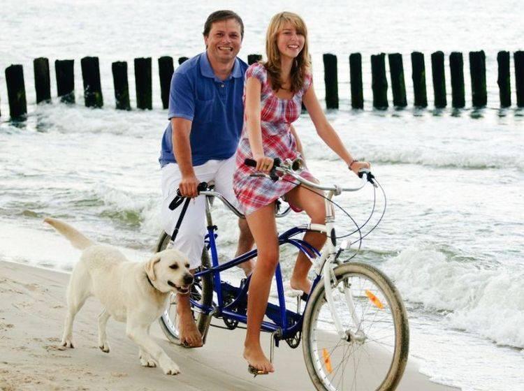 Retriever Hund mit Fahrradfahrern am Meer