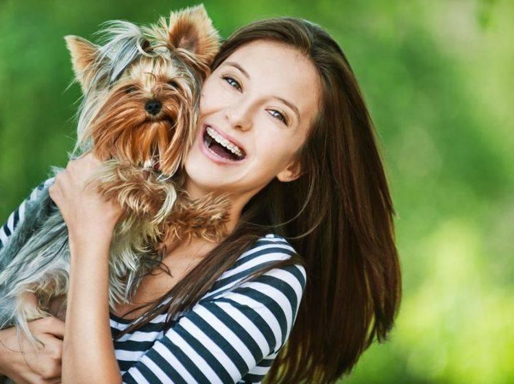 Yorkshire Terrier Hund auf dem Arm