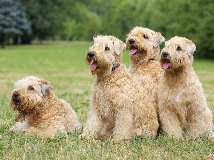 Hunde auf der Wiese